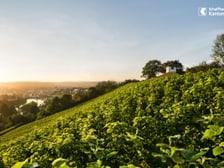 Blick von der Rheinhalde auf die Stadt Schaffhausen